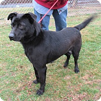 Adopt A Pet :: Blackie - Reeds Spring, MO