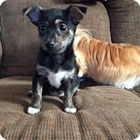 Adopt A Pet :: Angel - Hamilton, ON