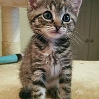 Adopt A Pet :: Alfie - Athens, GA