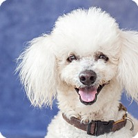 Adopt A Pet :: Finn - Victoria, BC