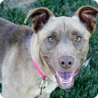 Adopt A Pet :: Elliott - GREAT dog!  29 lbs! - Bellflower, CA