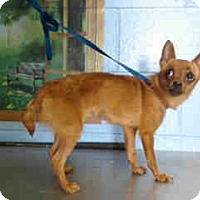 Adopt A Pet :: URGENT ON 6/30  San Bernardino - San Bernardino, CA