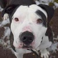 Adopt A Pet :: SID- social & sweet family boy - Snohomish, WA