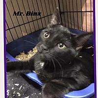 Adopt A Pet :: Binx - Brainardsville, NY
