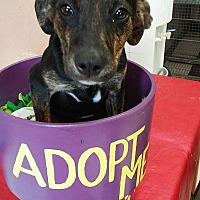 Adopt A Pet :: Tony - Hagerstown, MD