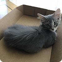 Adopt A Pet :: Rowena (Ro) - Fort Lauderdale, FL