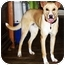 Photo 3 - Australian Cattle Dog/Labrador Retriever Mix Dog for adoption in Latrobe, Pennsylvania - Rufus