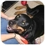 Photo 4 - Rottweiler Dog for adoption in Austin, Texas - Cheyenne
