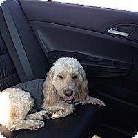 Adopt A Pet :: Rocco - Marlton, NJ
