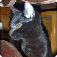 Adopt A Pet :: Ciabatta - San Ramon, CA