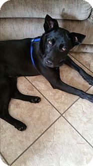 Shepherd (Unknown Type) Mix Dog for adoption in Smithfield, North Carolina - Keeper