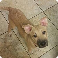 Adopt A Pet :: Xena *PENDING* - Lima, OH