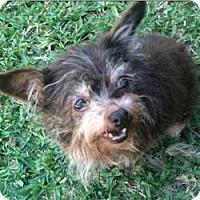 Adopt A Pet :: Opal - Lancaster, TX