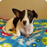 Adopt A Pet :: Roxy - Lodi, CA