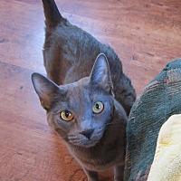 Adopt A Pet :: Chewey - Chandler, AZ