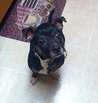Hound (Unknown Type) Mix Dog for adoption in San Jacinto, California - Frankenstein