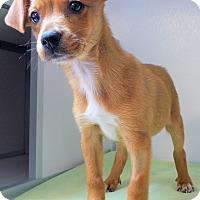 Adopt A Pet :: Kirby - Manning, SC