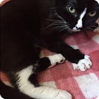 Adopt A Pet :: Krissa - Manchester, CT