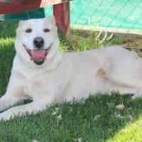 Adopt A Pet :: Luna - Las Cruces, NM