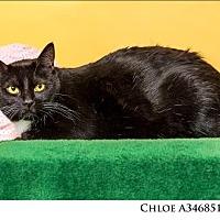 Adopt A Pet :: Chloe - Reno, NV