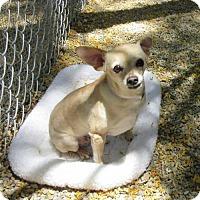 Adopt A Pet :: Melody - Oakland, CA