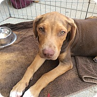Adopt A Pet :: Harriet - Hohenwald, TN