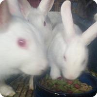 Adopt A Pet :: Three babies - Lake Elsinore, CA