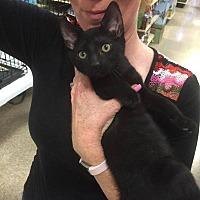 Adopt A Pet :: Puck - Tampa, FL