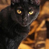 Adopt A Pet :: Dahlia - Philadelphia, PA