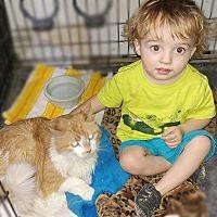 Adopt A Pet :: Butterscotch - Harleysville, PA