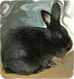 New Zealand Mix for adoption in Lewisville, Texas - Mabelle