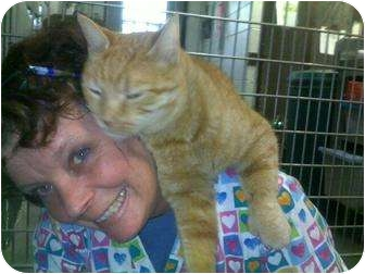 Domestic Mediumhair Cat for adoption in Lake Linden, Michigan - Hunter