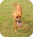 Black Mouth Cur Mix Puppy for adoption in Mary Esther, Florida - Sephora