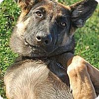Adopt A Pet :: Timber - Altadena, CA