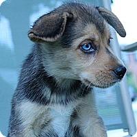 Adopt A Pet :: Billy - South Jersey, NJ