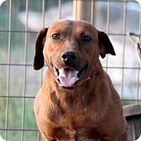 Adopt A Pet :: Arlo - Plano, TX