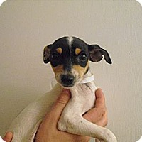 Adopt A Pet :: Valentina - Coral Springs, FL