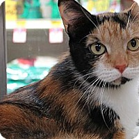 Adopt A Pet :: Matilda - Modesto, CA