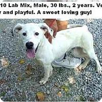 Adopt A Pet :: # 396-10 @ Animal Shelter - Zanesville, OH