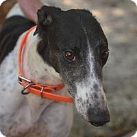 Adopt A Pet :: Alice - Pearl River, LA