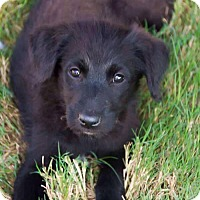 Adopt A Pet :: KENDRA - Fort Worth, TX