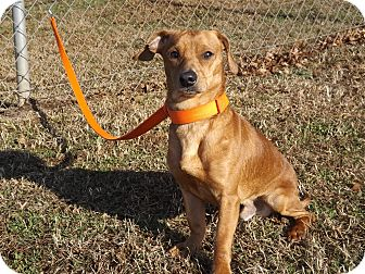 Dachshund Mix Dog for adoption in Thomaston, Georgia - Tripp