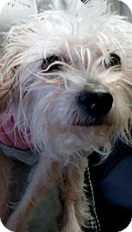Terrier (Unknown Type, Small) Mix Dog for adoption in Parma, Ohio - Tuti