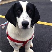 Adopt A Pet :: Finley - Northport, AL