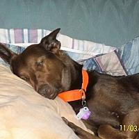 Adopt A Pet :: Dakota3 - Sumter, SC