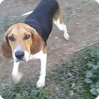 Adopt A Pet :: NORTON - Upper Sandusky, OH