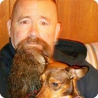 Adopt A Pet :: Maddie Sue - Plain City, OH