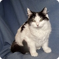 Adopt A Pet :: K-Kimi1-Pebbles - Colorado Springs, CO