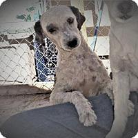 Adopt A Pet :: Brady - Golden Valley, AZ