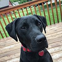 Adopt A Pet :: Chase - Prior Lake, MN